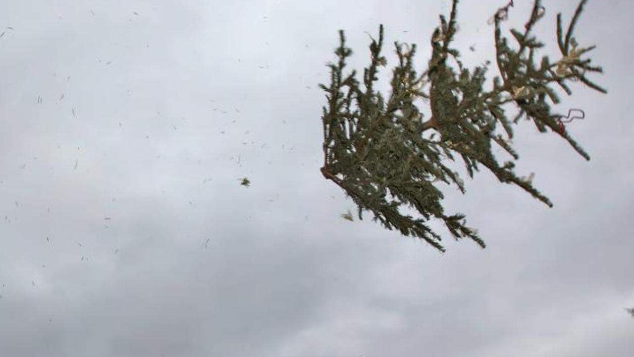 Flying Christmas Trees in Berlin - Christmas tree throw - on the 6th of January